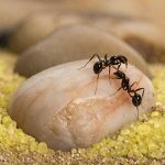 Sand-Ant-Farm-Basic-Formicarium-Educational-Ants-Anthill-0-2
